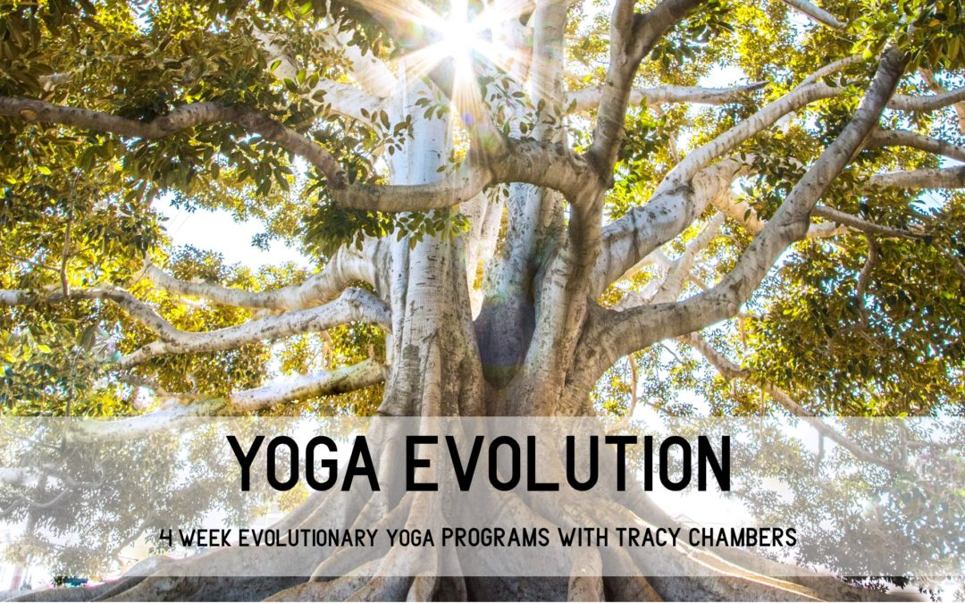 Yoga Evolution | Individually tailored yoga